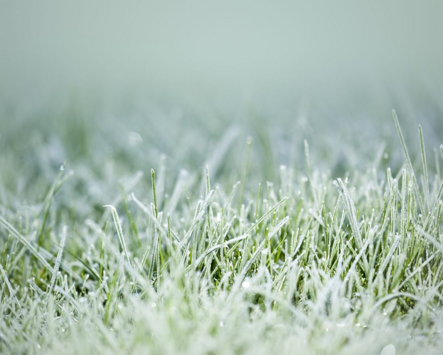 3-lawn-green-grass-snow-frost