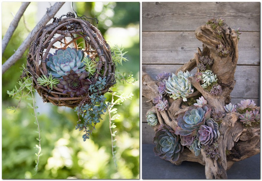 10-creative-garden-decor-ideas-succulent-composition