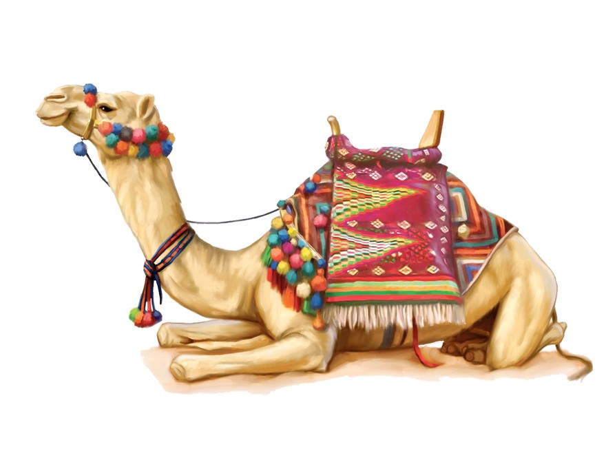 2-camel-image-sitting-lying-with-bright-ethnic-blanket-seat-pompoms