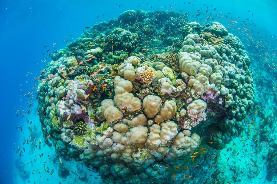 5-coral-reef-underwater-picture-fish-beautiful-blue-water-ocean