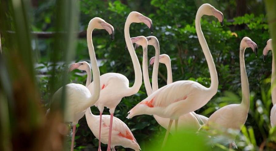 2-3-das-tropical-island-resort-germany-indoor-water-park-flamingo-birds