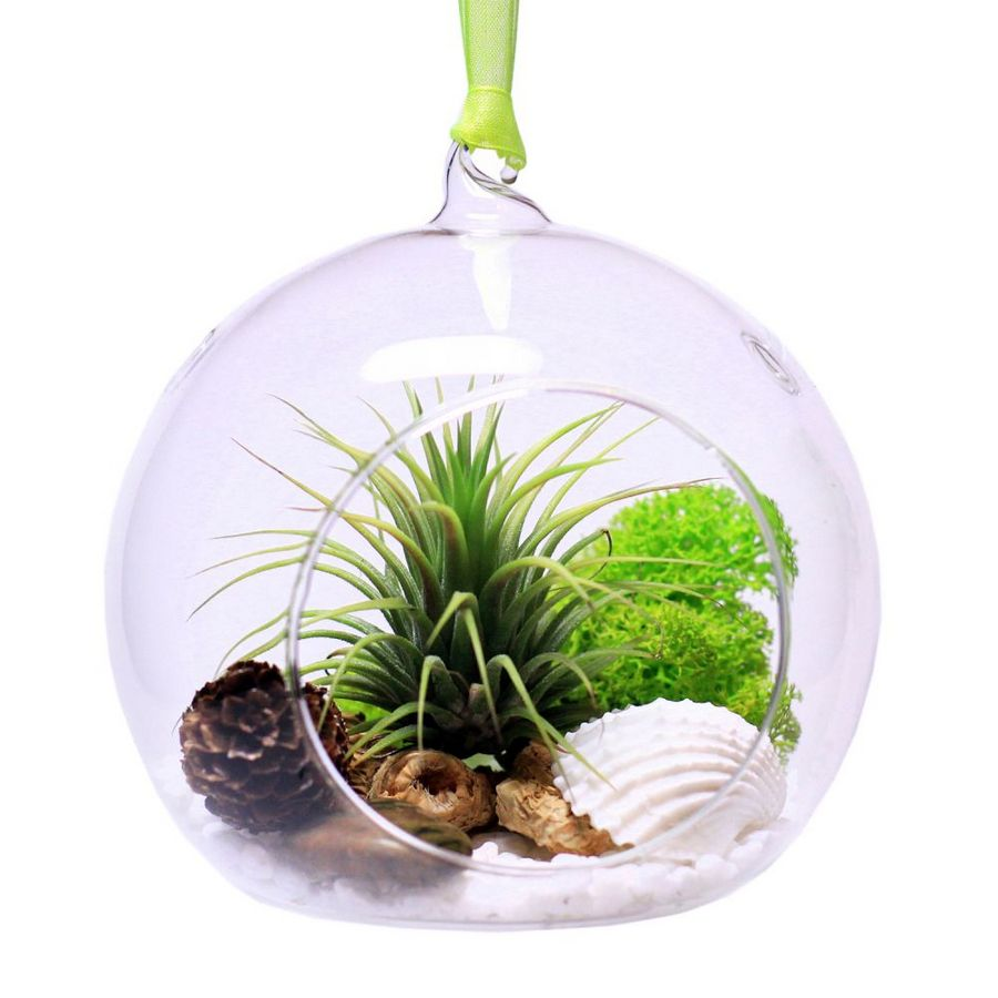 0-tillandsia-airplant-air-plant-aerophyte-epiphyte-ideas-in-interior-design-growing-in-a-florarium-pine-cones-shells-moss