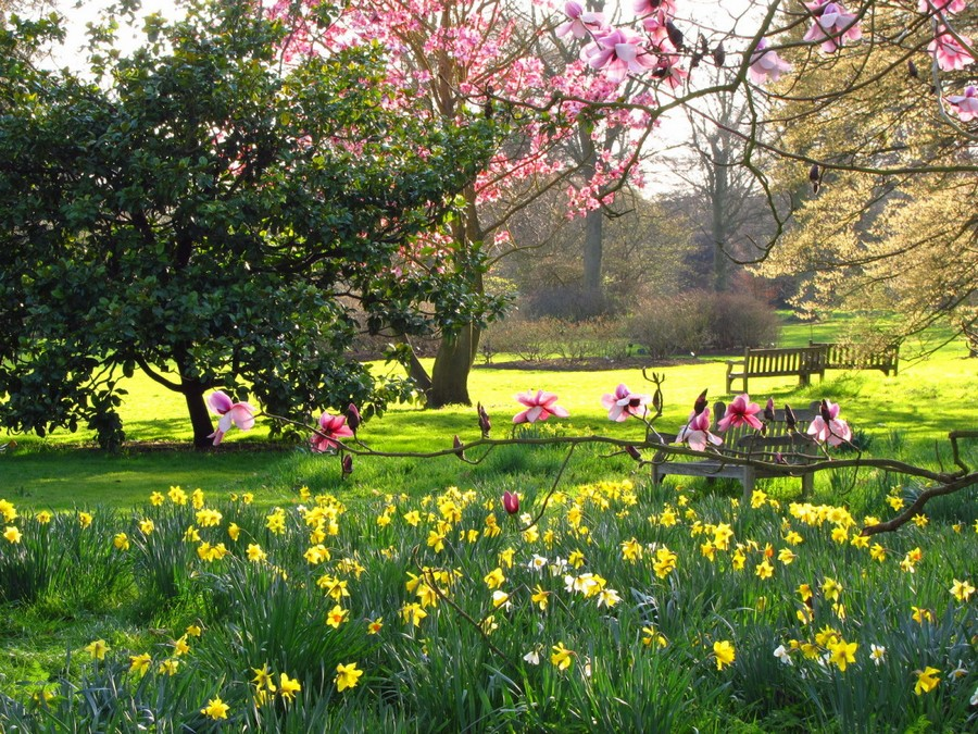 1-blooming-lawn-blossom-first-spring-flowers-in-the-park-planted-in-the-lawn-yellow-daffodils