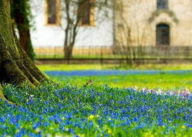 10-blooming-lawn-blossom-first-spring-flowers-in-the-park-planted-in-the-lawn-blue-snowdrops