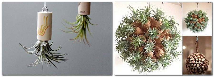 3-2-3-2-tillandsia-airplant-air-plant-aerophyte-epiphyte-ideas-in-interior-design-growing-in-wine-corks-Christmas-ball-decor-vertically