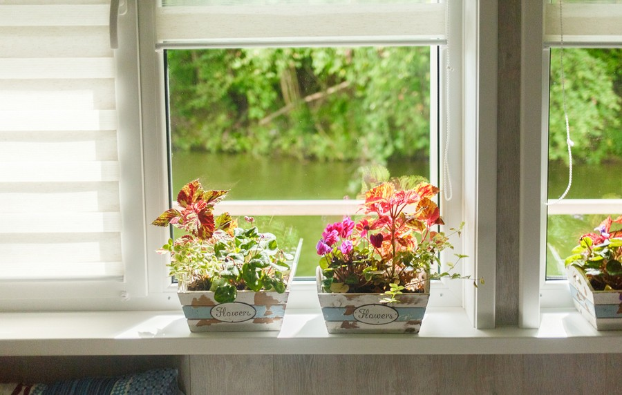 4-3-beautiful-flower-pots-small-indoor-plants-on-a-window-sill-river-view