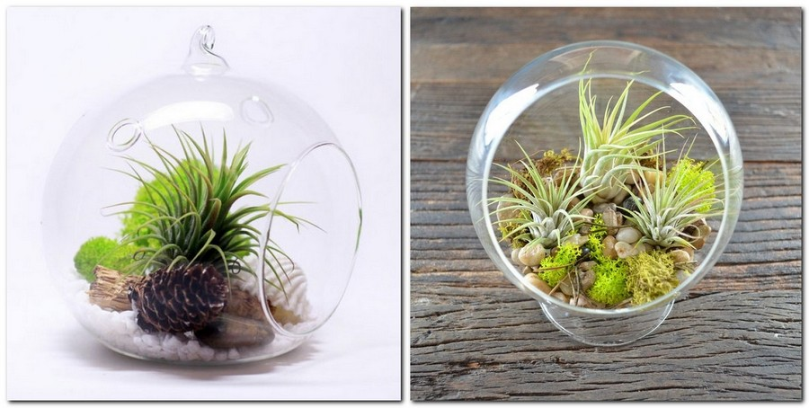 4-tillandsia-airplant-air-plant-aerophyte-epiphyte-ideas-in-interior-design-growing-in-a-florarium
