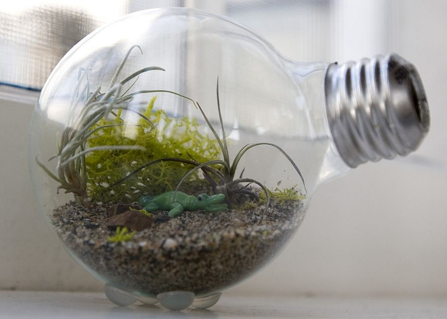 7-tillandsia-airplant-air-plant-aerophyte-epiphyte-ideas-in-interior-design-growing-in-a-bulb