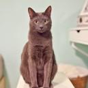 14-cat