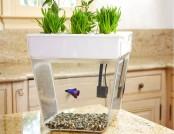 Aquafarm: 2 in 1 – Fish & Herbs