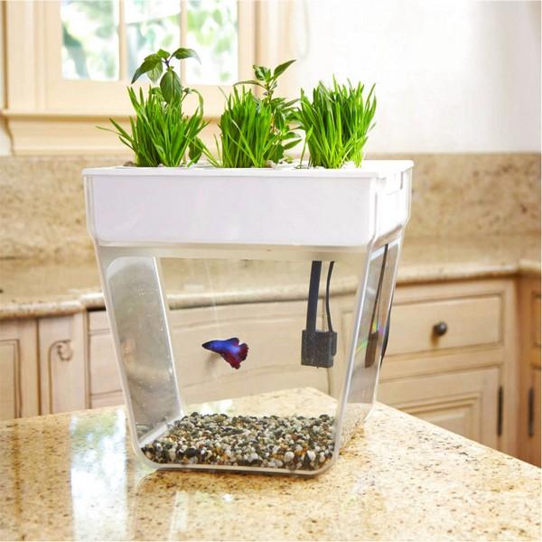 1-aquafarm-hydroponic-eco-system-for-indoor-herbs