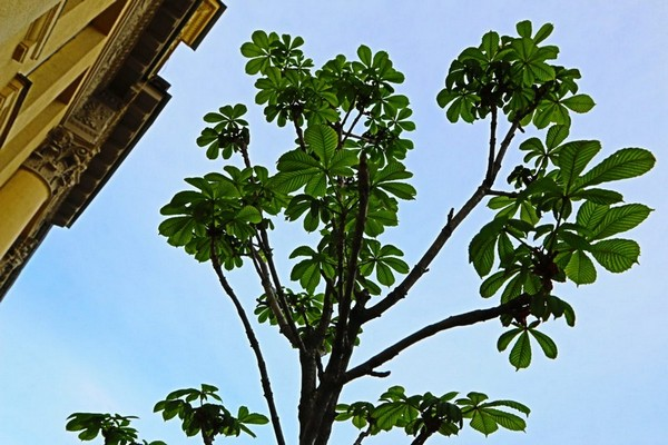 2-beautiful-balcony-chestnut
