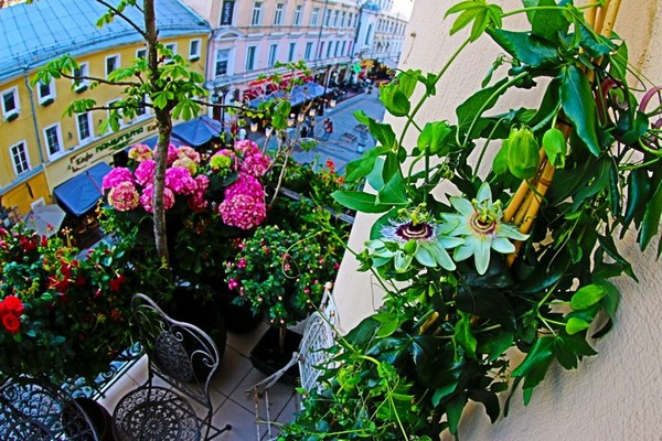 3-beautiful-balcony--forged-lattice-furniture-table-chairs-blooming-passion-flowers-fuchsia-roses