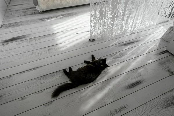 7-white-aged-vintage-oak-ebony-floor-Lualdi Porte-sliding-door-black-cat-on-the-floor