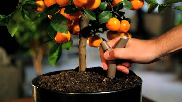 8-smart-home-garden-device-parrot-flower-power