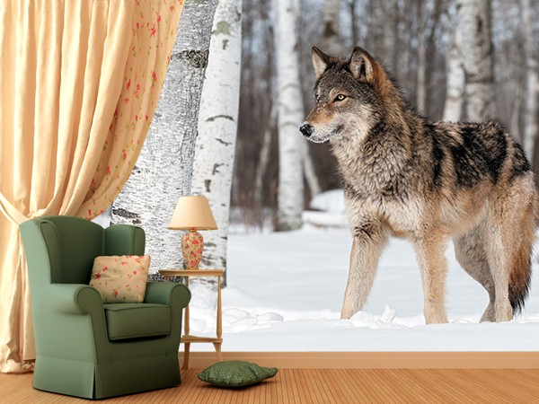 8-winter-wolf-snow-photo-wallpaper-wall-mural-printing-in-interior-design