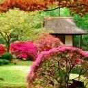 1-Japanese-garden-plants-gazebo-pink-blossom-shrub-maple