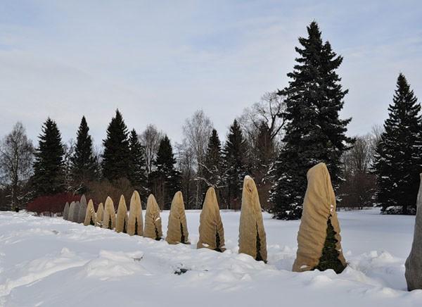 1-garden-in-winter-overwintering-covered-arbovitae-trees