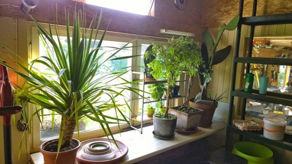 3-garden-in-winter-potted-plants-overwinter-in-cool-place