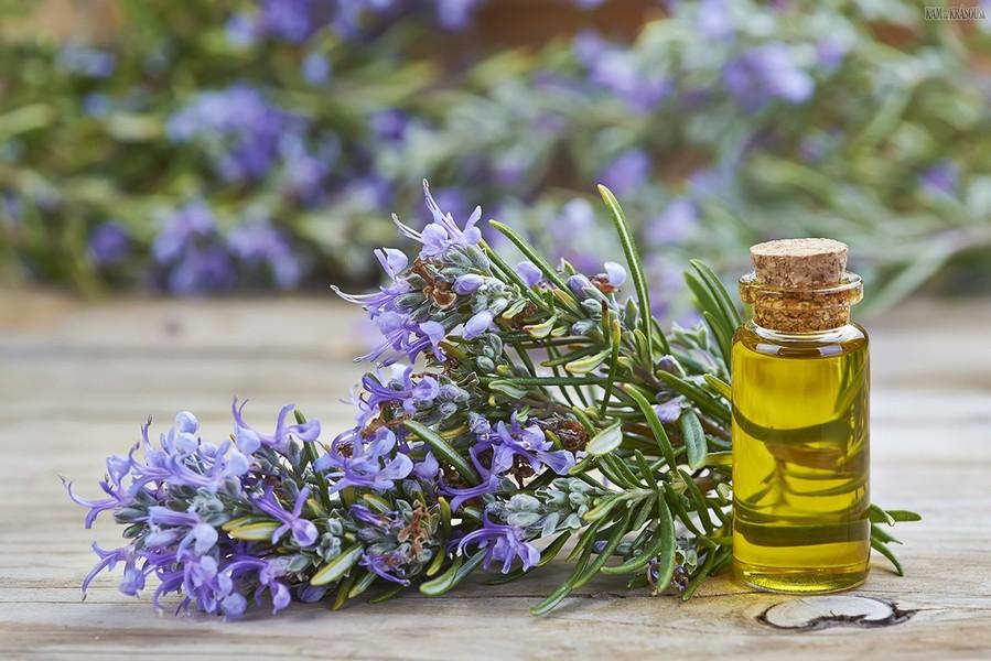 5-rosemary-essential-oil-flowers-home-aroma-bottle