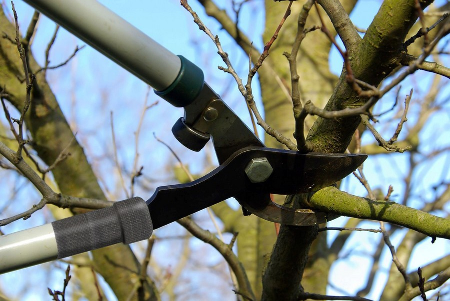 5-trmming-fruit-trees-in-february-march