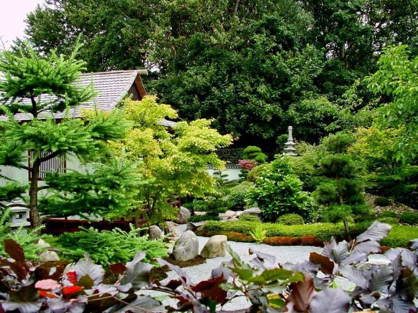 6-2-Japanese-garden-plants-conifers
