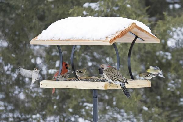 7-birds-feeder-in-garden-in-winter