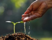 How to Grow Plants from Seed: Guide on Seedlings (Part 3)