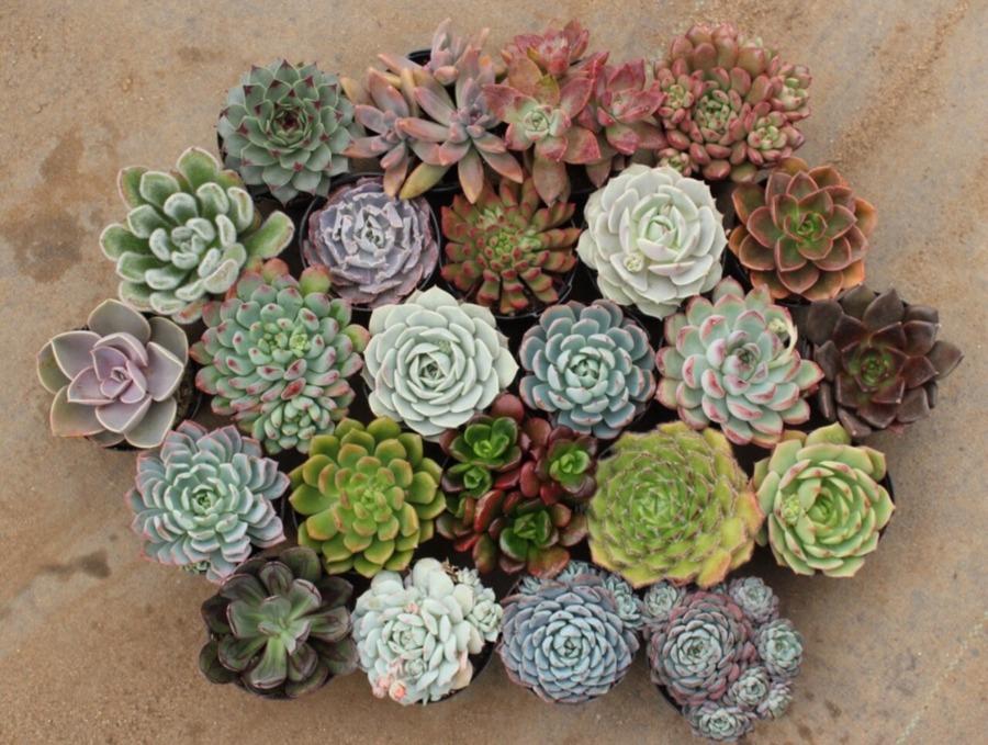 0-undemanding-indoor-plants-succulents-composition