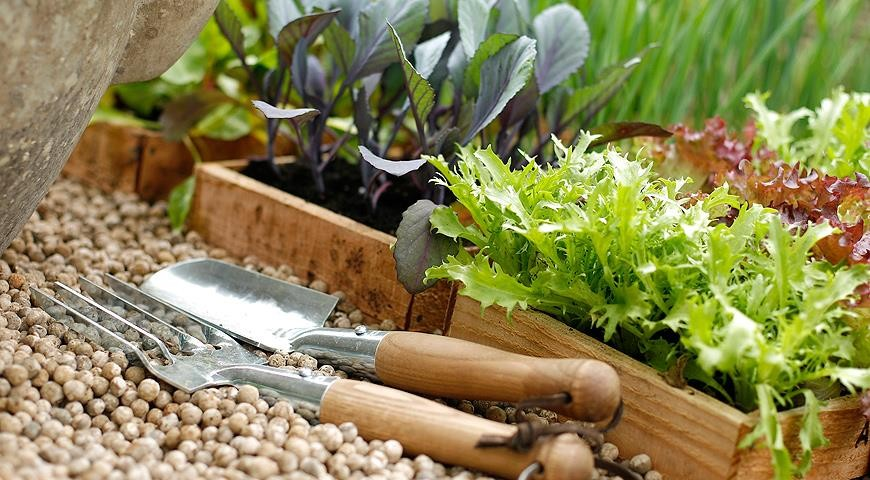 1-seedlings-boxes-gardening-tools