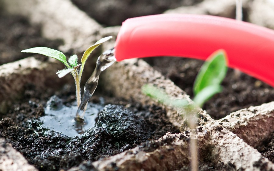 1-watering-young-plant-seedling-from-watering-can-in-peat-cups-containers