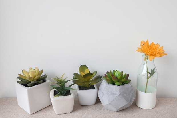 2-undemanding-indoor-plants-potted-small-succulents