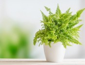 5 Undemanding Indoor Plants That Almost Don't Need Care