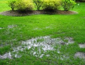 Dealing with Clay Soil and a Waterlogged Lawn