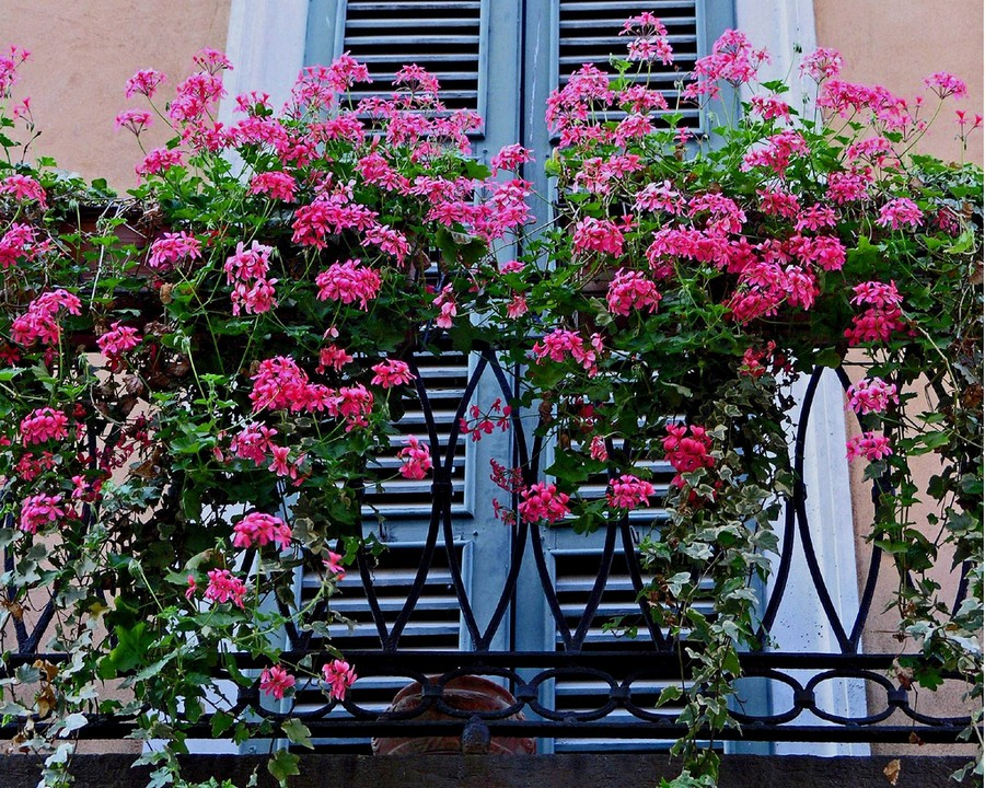 24-beautiful-balconet-balconette-Juliet-balcony-in-architecture-exterior-design-wrough-metal-railing-forgery-barrier-flower-bed