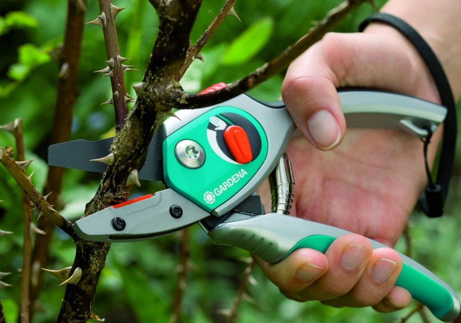 4-trimming-tree-branches-wth-garden-shears-in-spring