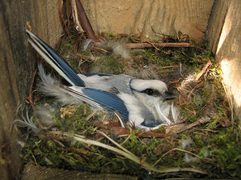 6-nestling-box-bird-in-birdhouse