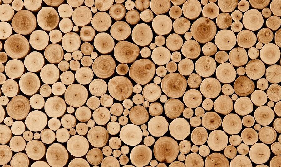 0-tree-wood-cross-sections-cuts