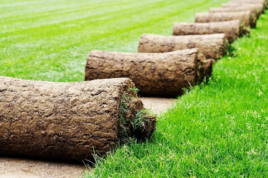 1-turf-lawn-rolls-grass-green