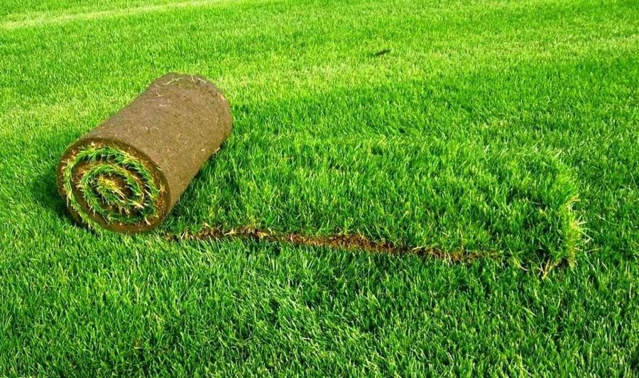 2-turf-lawn-roll-green-grass