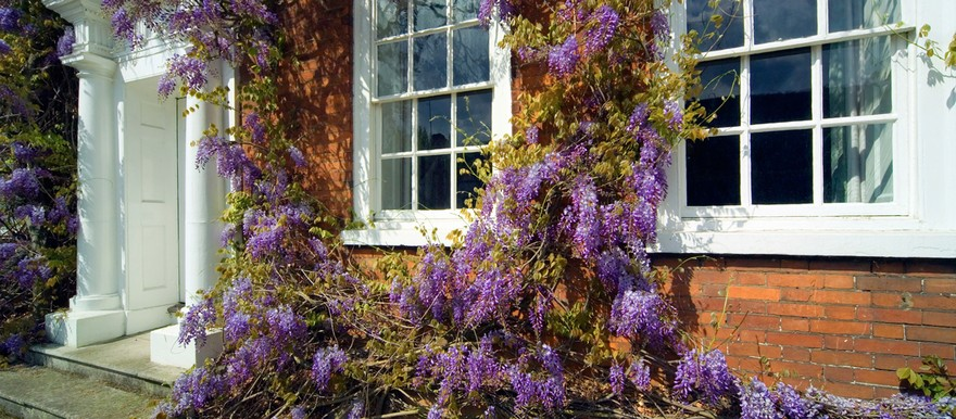 0-sash-windows-beautiful-violet-flowers-brick-house-masonry-white-porch-columns