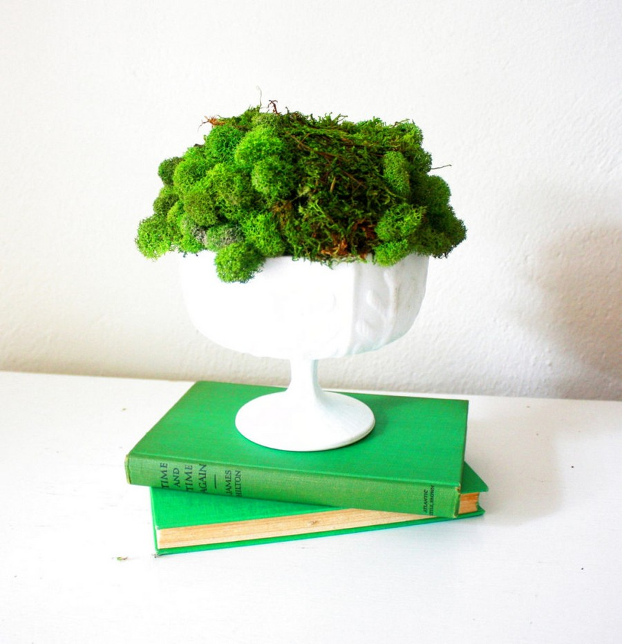 1-1-stabilized-natural-living-moss-in-interior-design-home-decor-composition-in-a-white-vase-green-books
