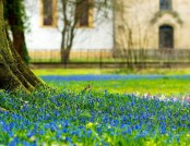 How to Create a Blooming Lawn in Your Garden for Next Spring?