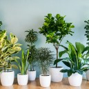 0-healthy-beautiful-indoor-plants-in-identical-white-pots