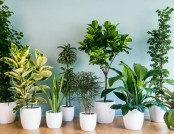 How to Care for Indoor Plants in February