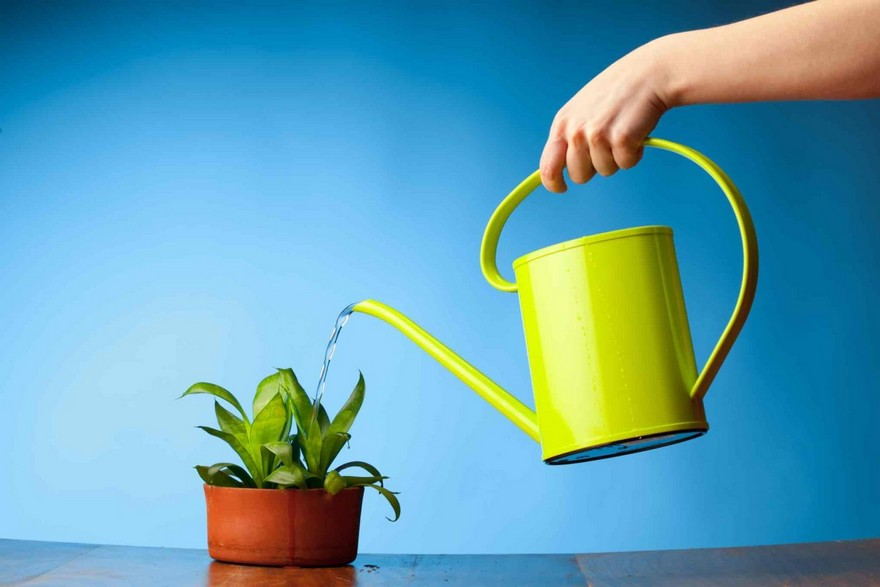 1-yellow-watering-can-indoor-pot-plant-flower