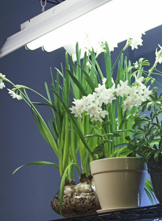 2-additional-artificial-fluorescent-light-for-indoor-plants-daffodils