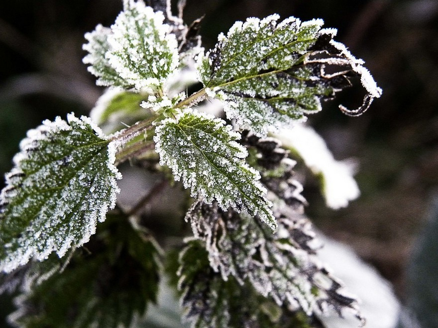 4-frost-on-plants