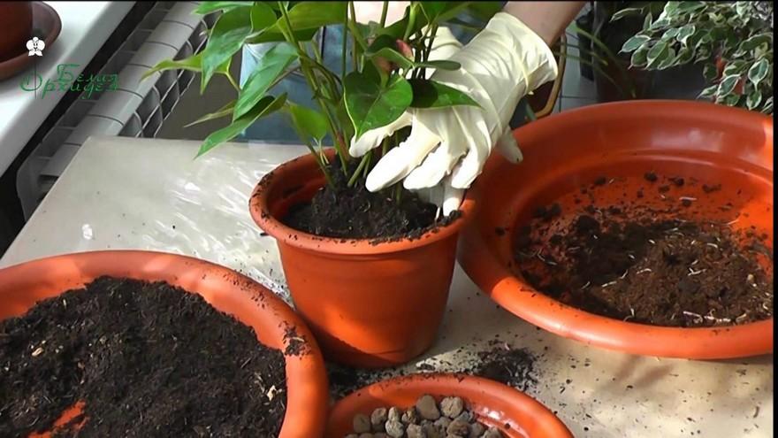 6-replanting-indoor-plants-to-bigger-pots